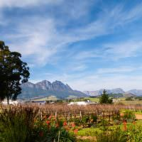 stellenbosch-winelands-penguins-2-of-my-favourite-things