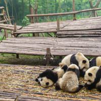 Where To Sleep In Chengdu: For Budget Backpackers