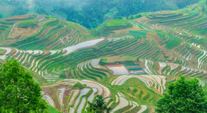 rice terraces in guilin china