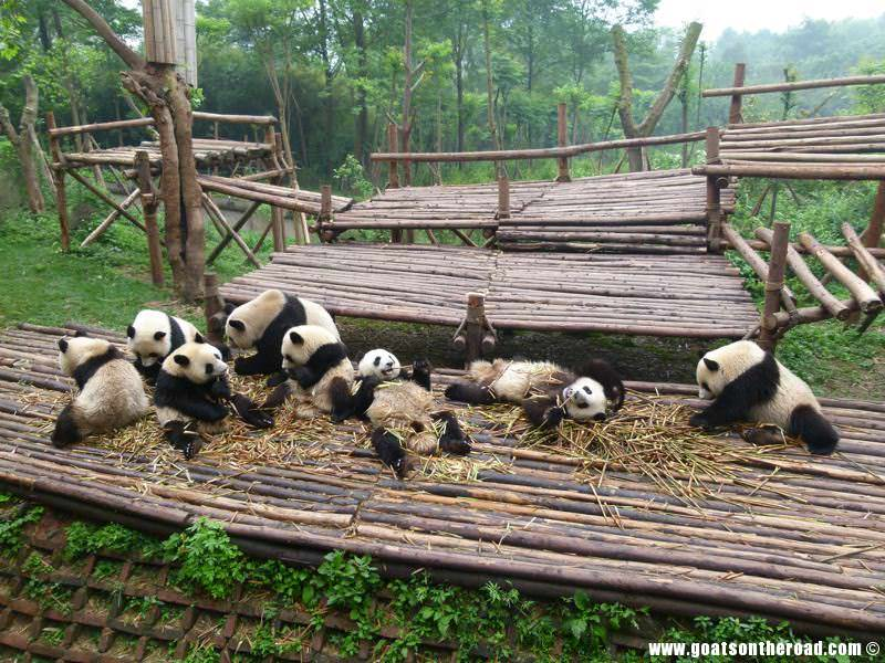 Chengdu budget backpacker city tips and information