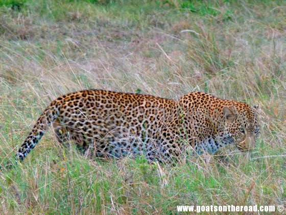 masai mara for budget backpackers