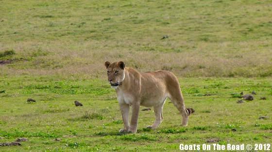 Lion's Pose