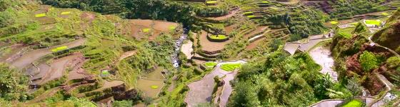 Budget Backpacking the banaue rice terraces