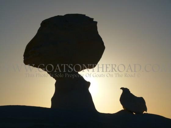 A Chicken Under A Tree - Weird Formations In The White Desert