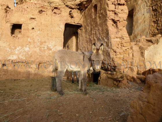 Donkey Fro - Mut