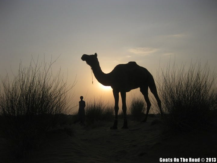 Animals of the world Camel At Sunset - Jaisalmer, India