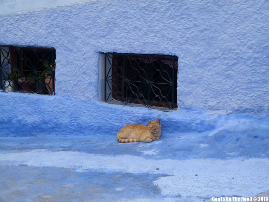 Animals Of The World Ginger Cat Out Of The Blue - Chefchaouen, Morocco