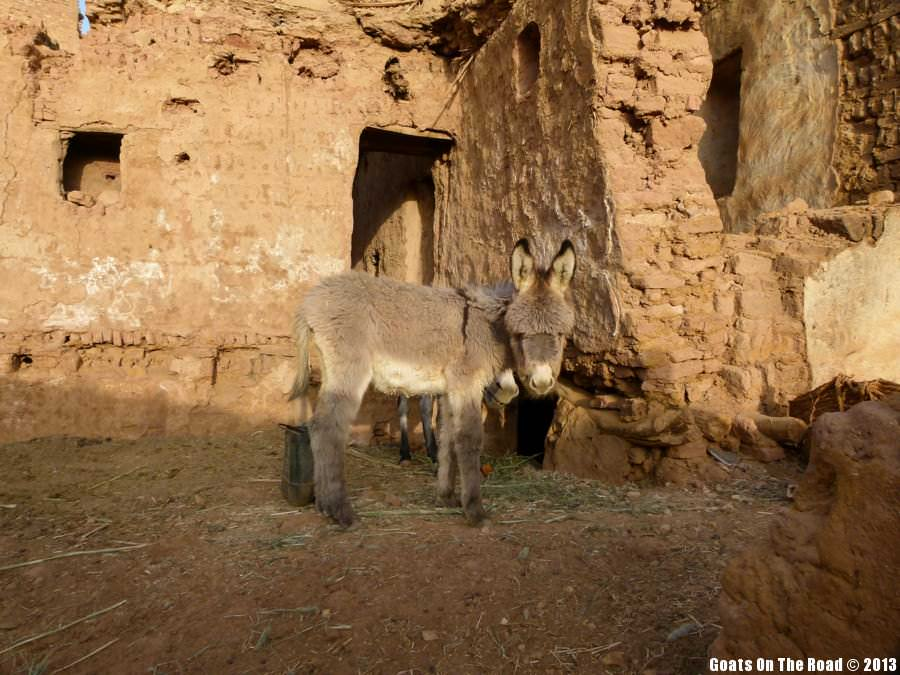Animals Of The World Afro Donkey - Mut, Egypt