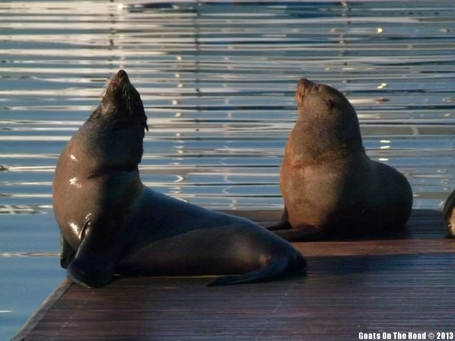 Seals - Cape Town, South Africa