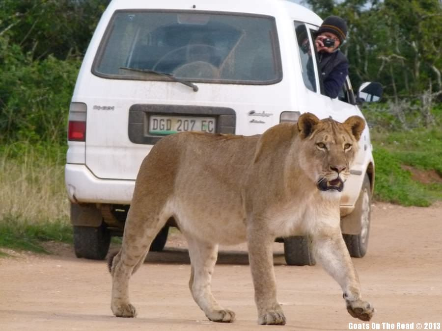 Animals Of The World Too Close For Comfort - Addo National Park, South Africa