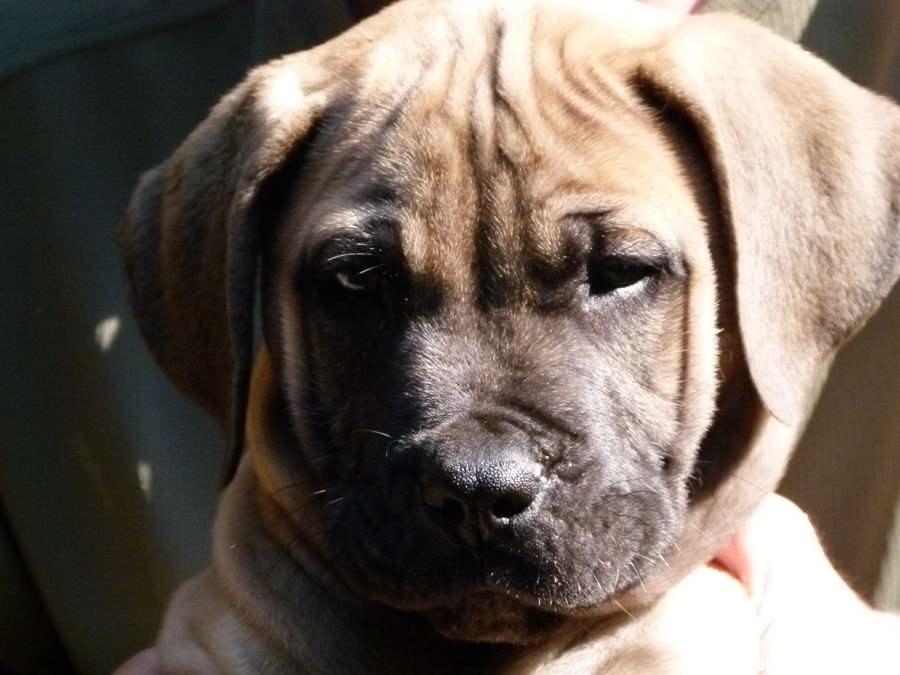 Puppy - Umzumbi, South Africa