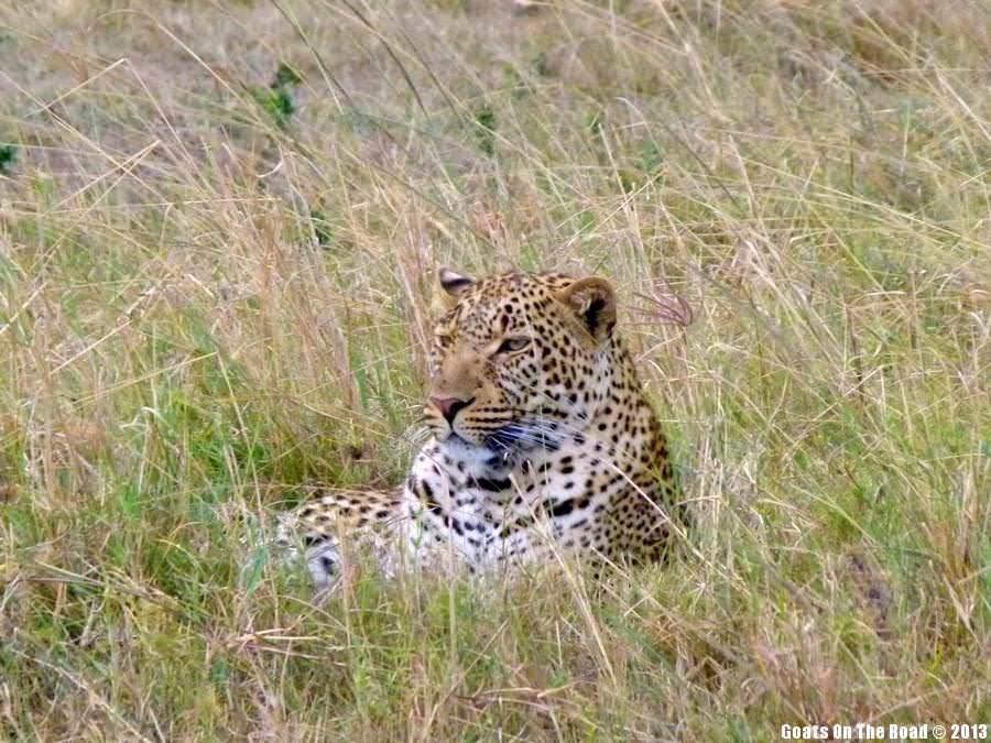 safari in the masai mara kenya