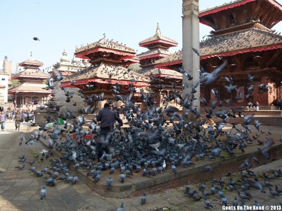 Pigeons - Kathmandu, Nepal