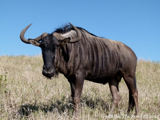 south african safari on a budget