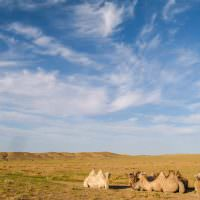 Our 6 Day Tour: Good Times In The Gobi Desert, Part #1