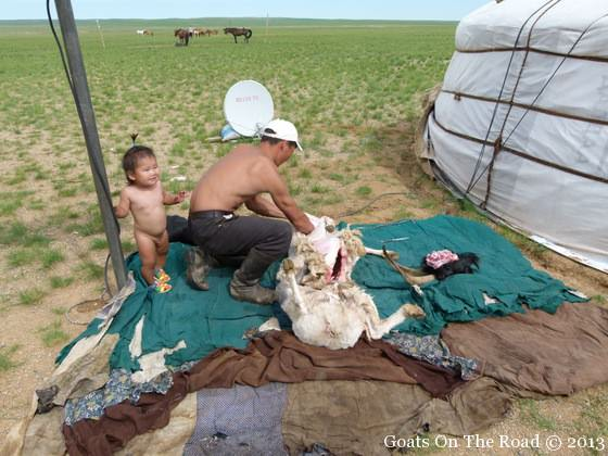skinning a sheep in the gobi
