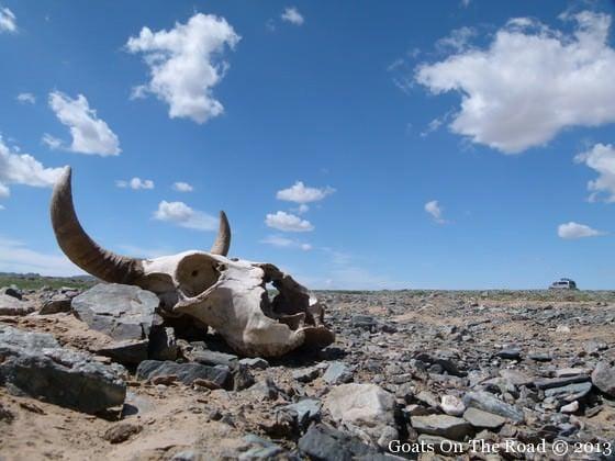 gobi desert skull