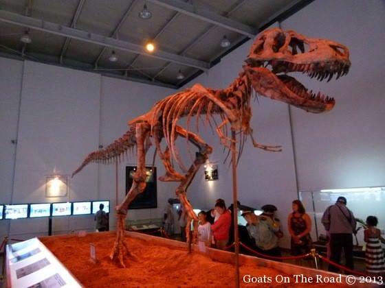 dinosaur skeleton mongolia