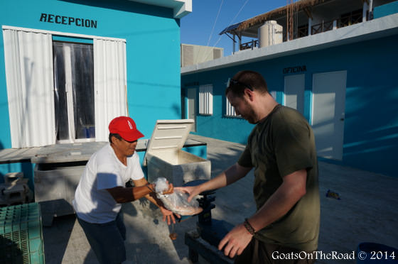 buying fish in mexico