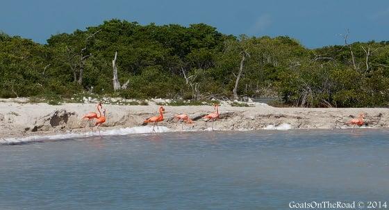 flamingos ria lagartos