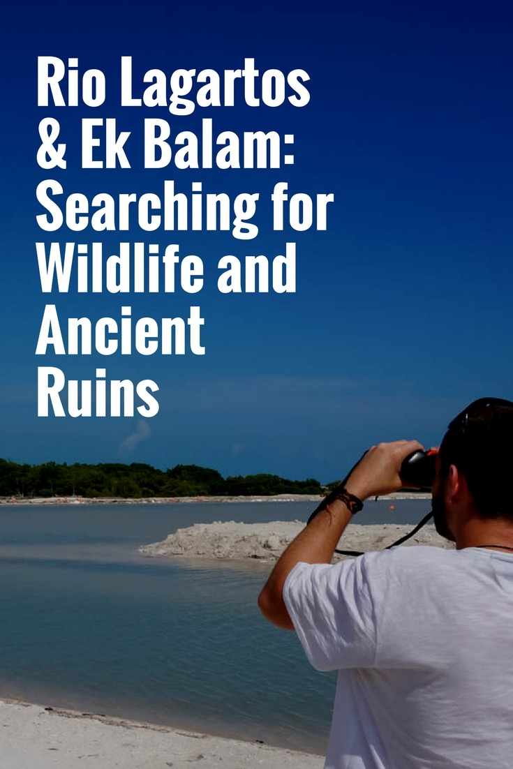 Rio Lagartos & Ek Balam: Searching for Wildlife and Ancient Ruins