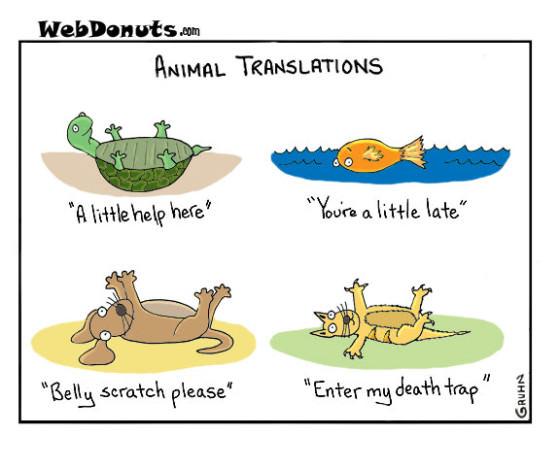 2012-06-01-Animal-Translations