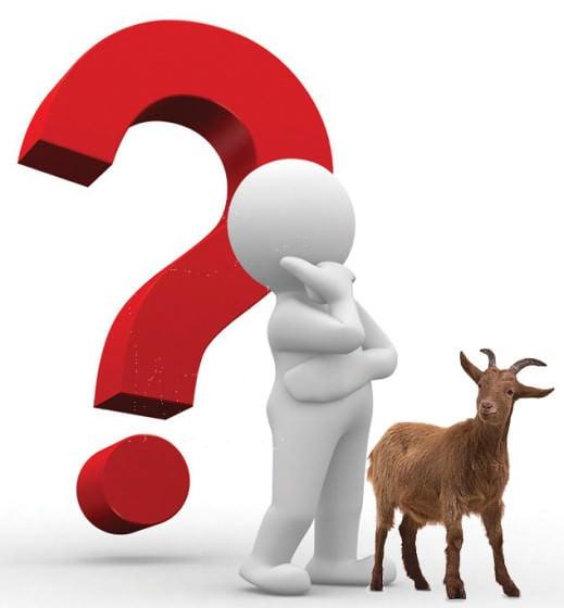 Goat Bewilderment