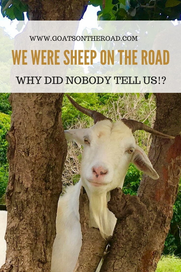 Why Did Nobody Tell Us We Were SHEEP On The Road-