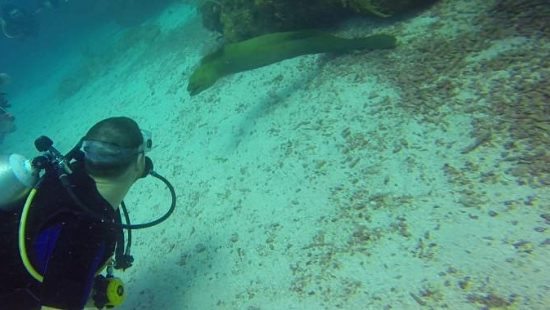 My Close Encounter With A Moray Eel