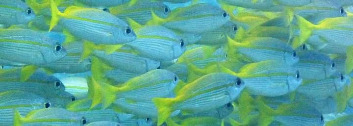 fish Dive Ambergris Caye Belize