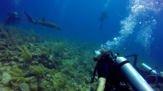 Shark Dive Ambergris Caye Belize