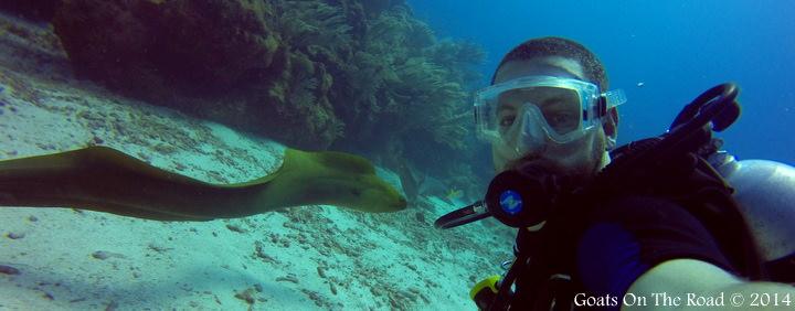Eel Dive Ambergris Caye