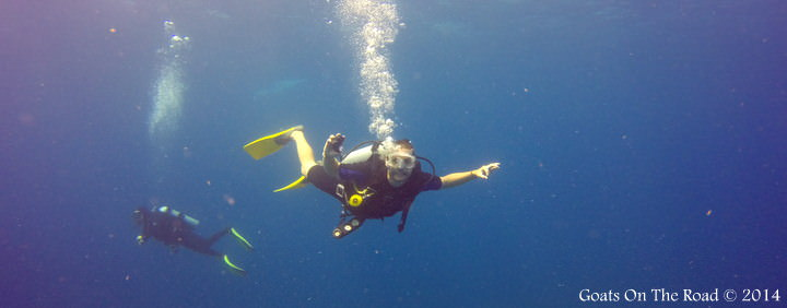 Diving Ambergris Caye Belize