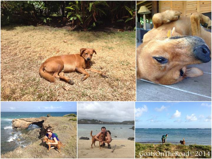 pet sitting in grenada