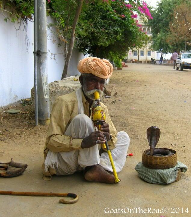 snake charmer rajasthan