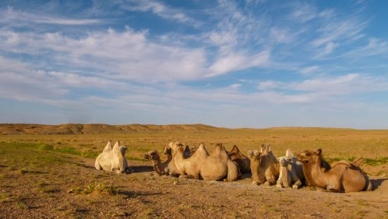 backpackers guide to a gobi desert tour in mongolia