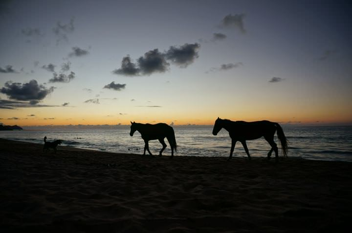 Horses in San Pancho at Sunset