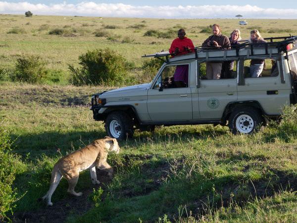 going on safari in africa