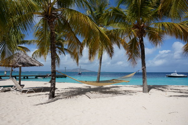 hammock palm island