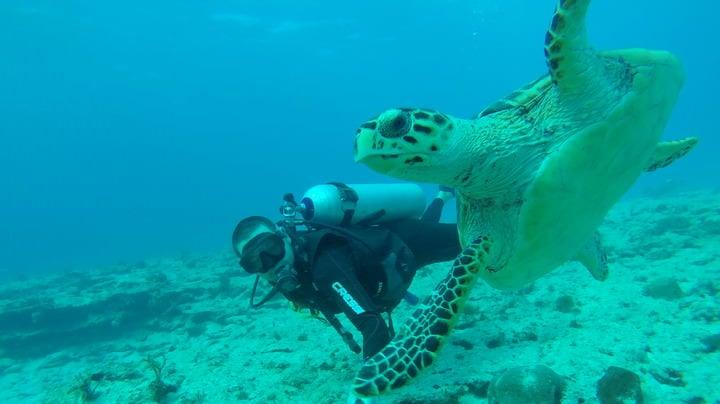 scuba diving isla mujeres