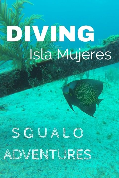 Diving Isla Mujeres With Squalo Adventures (1)