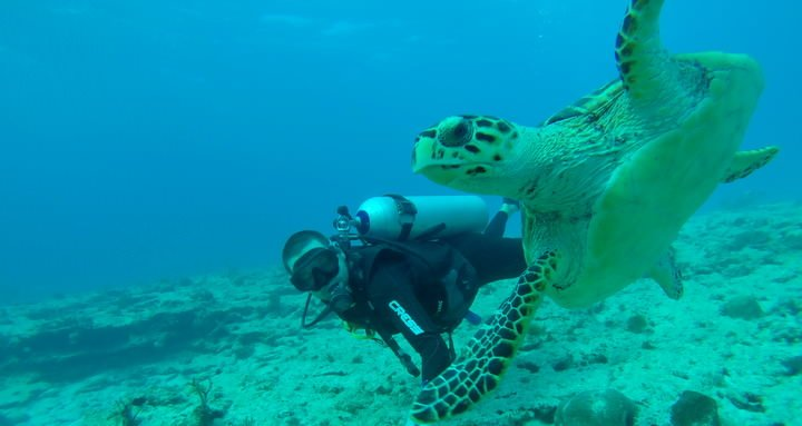 scuba diving is one of the best things to do in mexico
