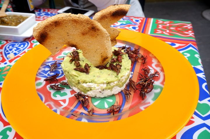 Grasshoppers & Cream Cheese... An Appetizer You May Not Find At Home.