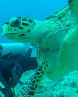 Diving Isla Mujeres, Mexico With Squalo Adventures