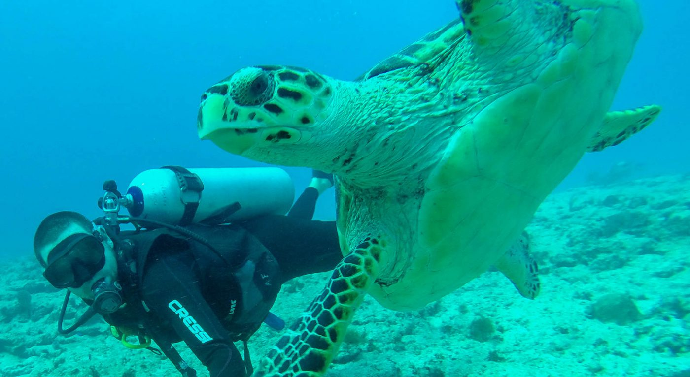 finding the best travel jobs for dive masters