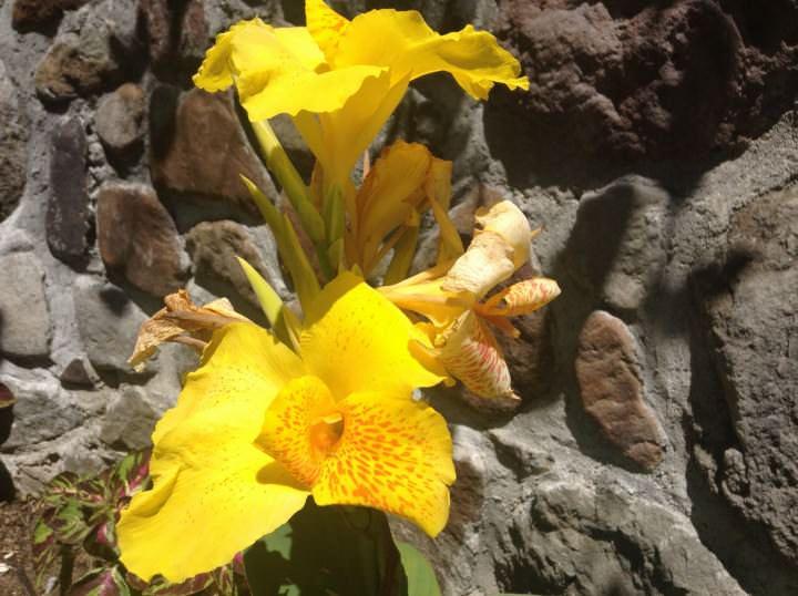 Atitlan Flowers