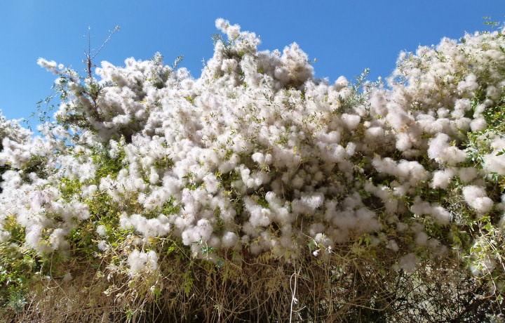 tree in bloom langar