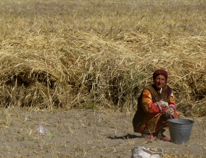 woman works in the field langar