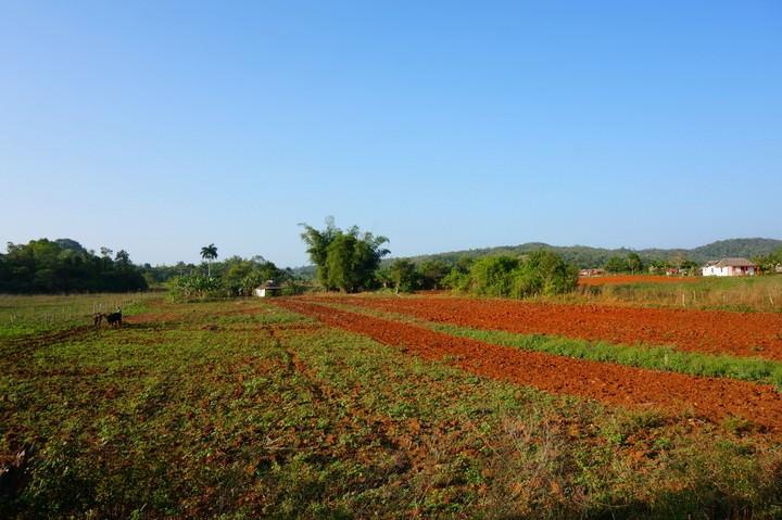 Vinales Farmland