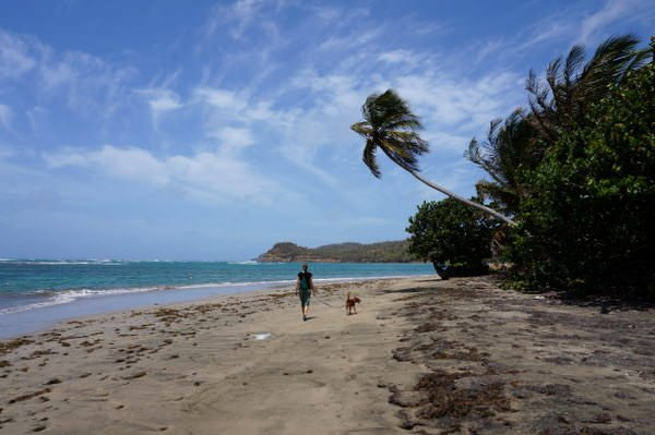 what to do in grenada